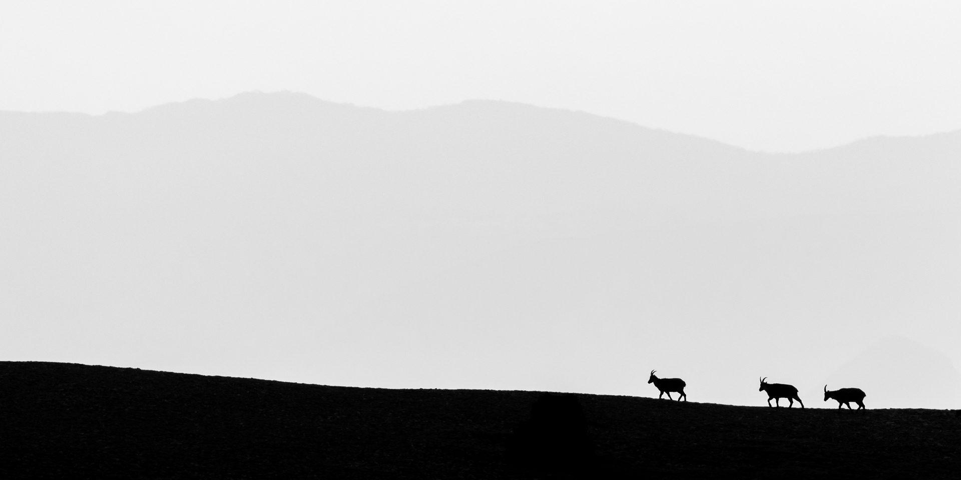 Regards d'en haut - Vincent Astier-Perret - Photographie de montagne et de pleine nature - Vincent Astier Photos